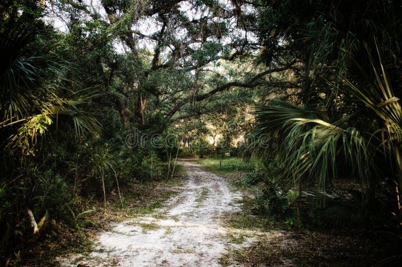 Contexte de chemin de terre de jungle subtropicale de forêt image libre de droits