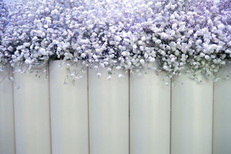 Contexte de fleurs blanches images libres de droits