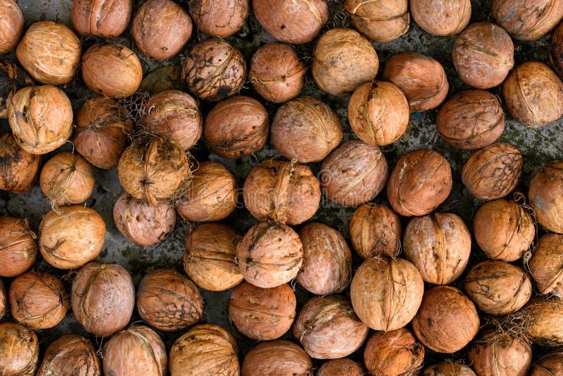 Contexte nuts de modèle de noix de dans-SHELL de nourriture naturelle photographie stock libre de droits