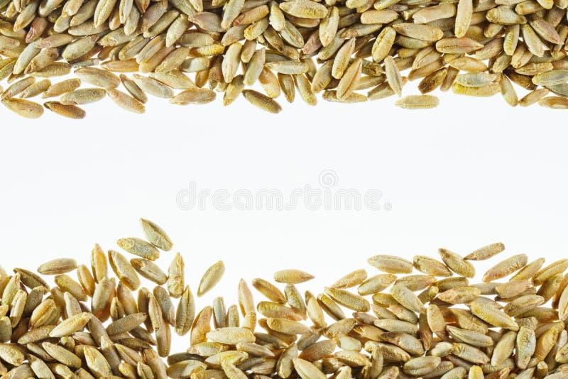 Contexto blanco con el grano del trigo imagen de archivo