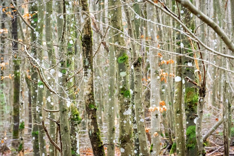 Contexto da textura da floresta de madeira imagens de stock royalty free