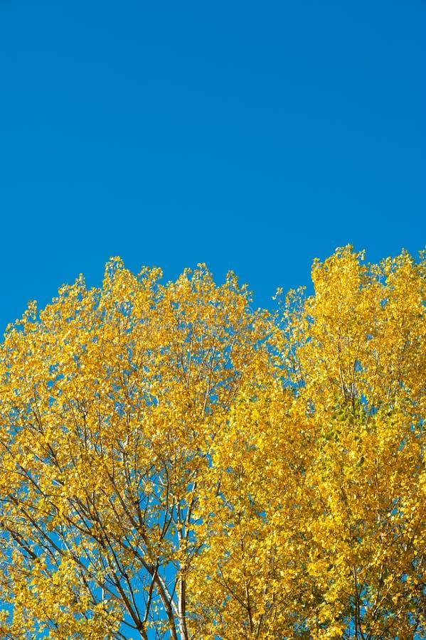 Contexto do outono fotos de stock