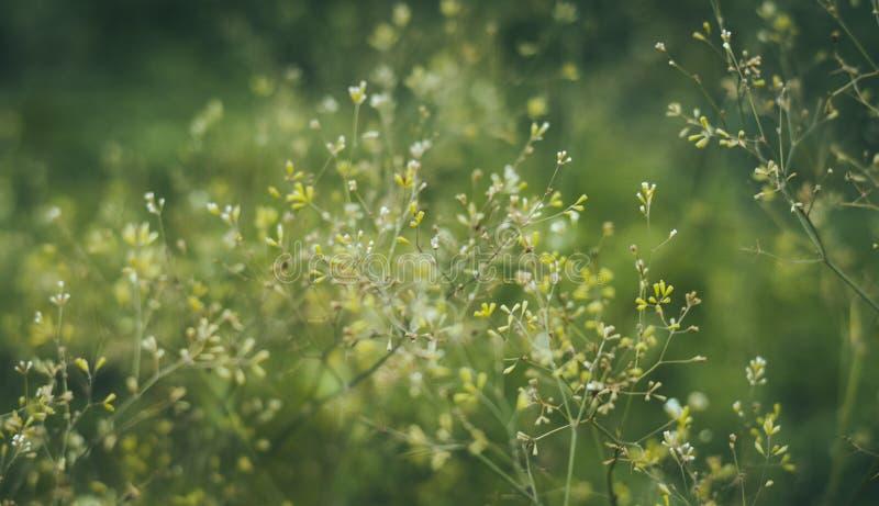 Contexto florido verde en colores pastel suave del bokeh foto de archivo