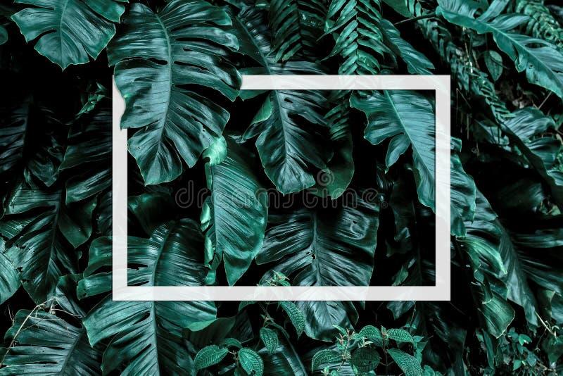 Contexto tropical da natureza do arbusto da planta da selva da folha das folhas com quadro branco foto de stock