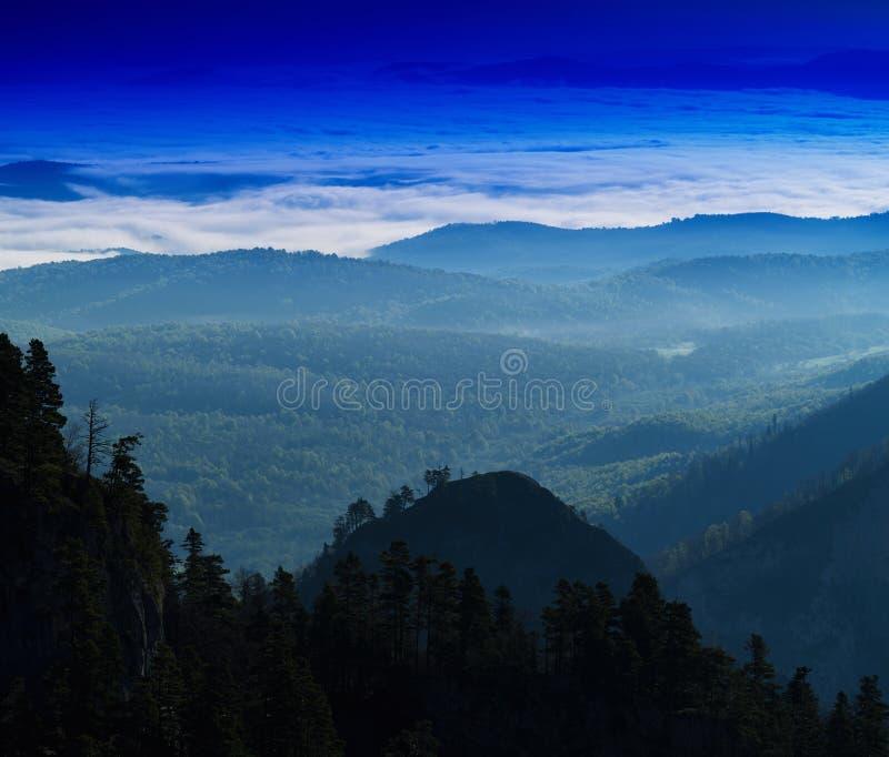 Contexto vívido horizontal do fundo da paisagem da floresta da montanha foto de stock royalty free