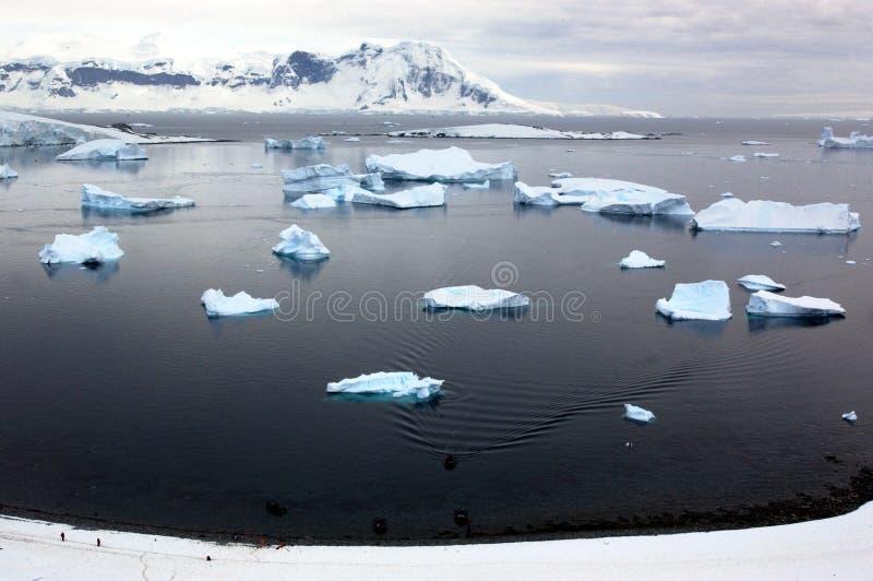 continent antarctique images stock