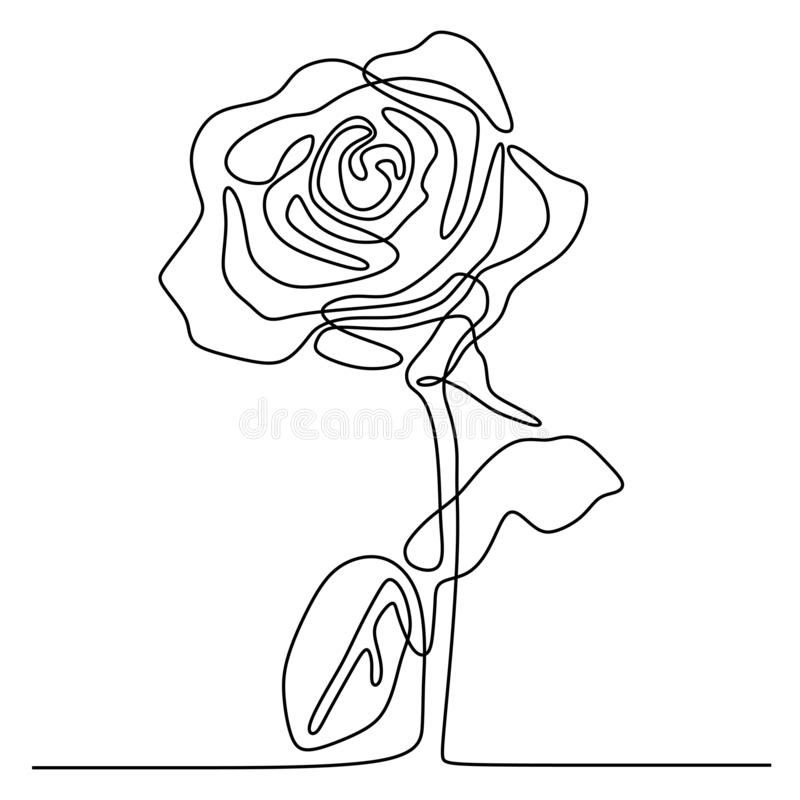 continuous line drawing of rose flower minimalism design isolated on white background royalty free illustration