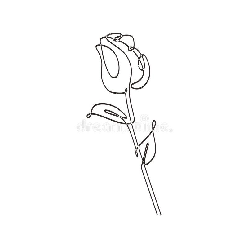 Continuous one line drawing rose flower minimalist design botanical garden theme royalty free illustration