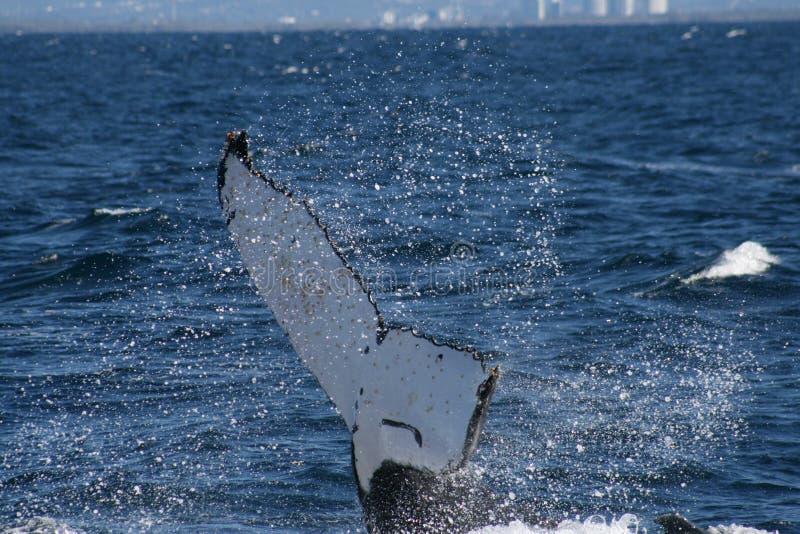 Download Conto da baleia foto de stock. Imagem de água, d0, playful - 65580720