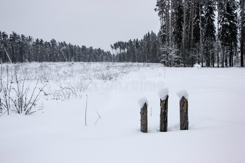 Conto de fadas branco - inverno Forest Landscape e neve - 4 imagem de stock