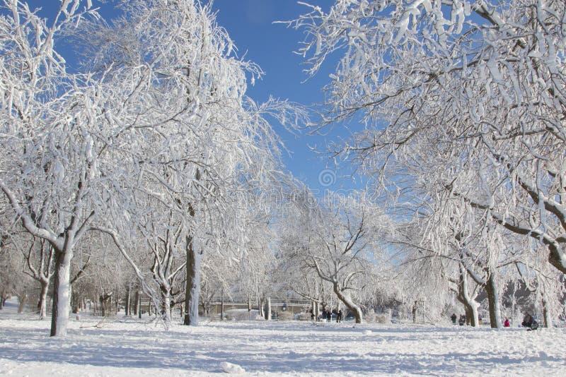 Conto de fadas da floresta do inverno foto de stock royalty free