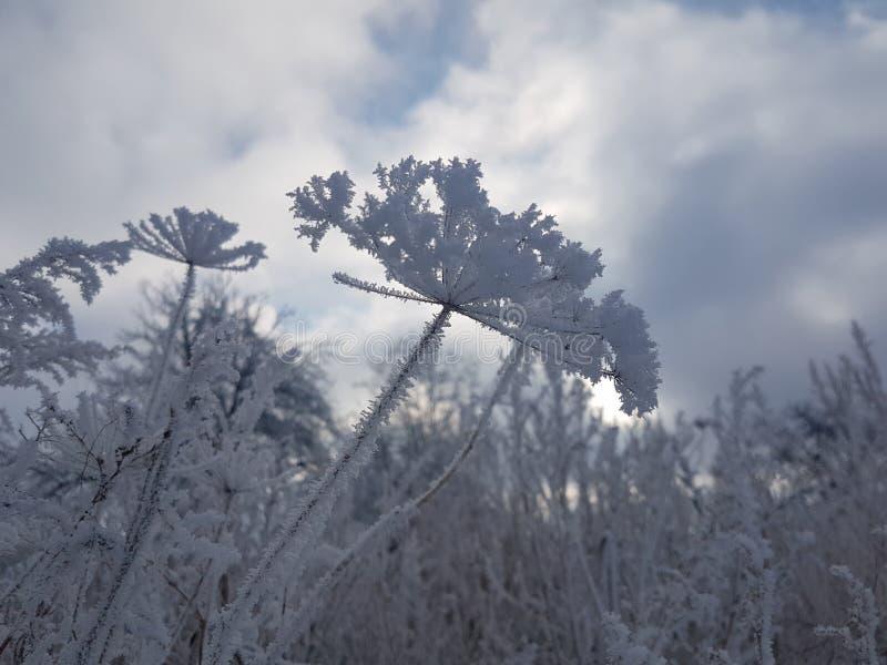 Conto de fadas do inverno imagem de stock