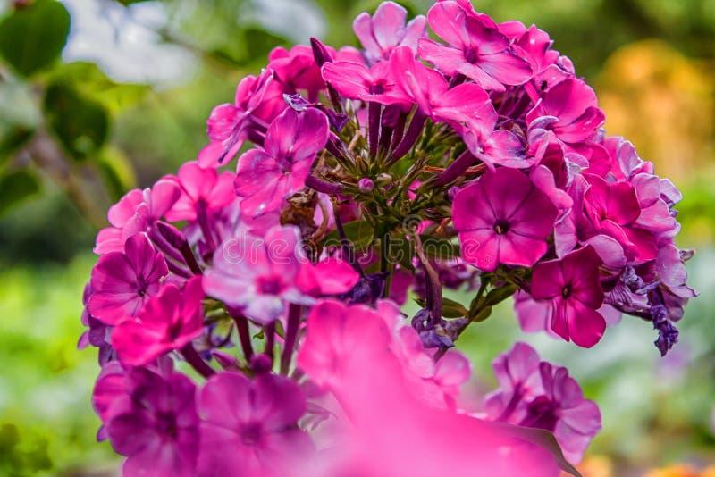 Conto de fadas floral para fotos de stock royalty free