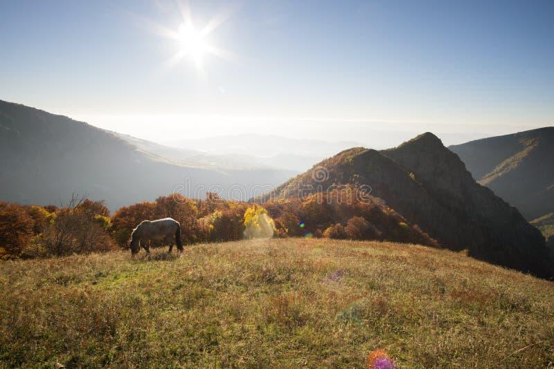 Conto do outono com nascer do sol e cavalos da montanha foto de stock