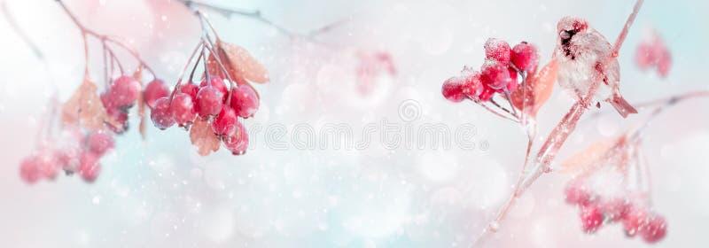 Conto mágico macio da floresta do inverno Bagas e pardal brilhantes vermelhos em um parque nevado Conceito do inverno e do outono foto de stock royalty free
