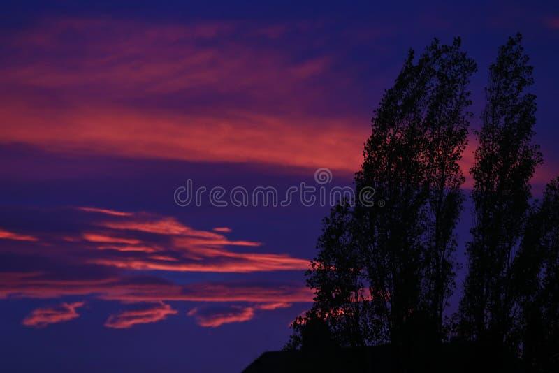 Contorno degli alberi con il tramonto variopinto immagini stock libere da diritti