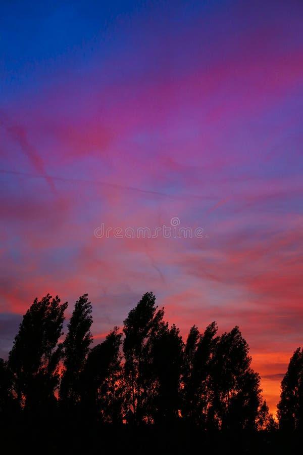 Contorno degli alberi con il tramonto variopinto fotografia stock