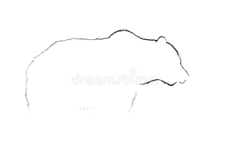Contorno dell'orso bruno in bianco e nero Contorno del corpo dell'orso su bianco fotografia stock libera da diritti