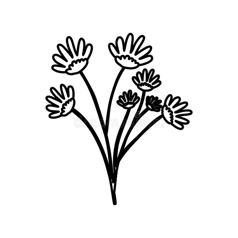 Contorno di schizzo del mazzo del fiore della margherita del disegno della mano con parecchie ramificazioni royalty illustrazione gratis