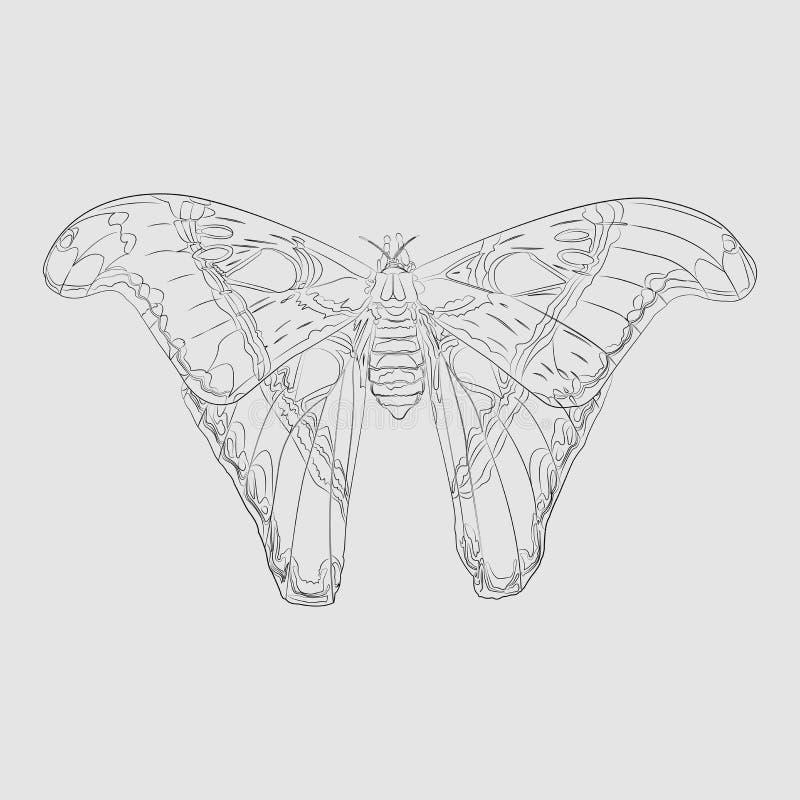 Contorno nero una farfalla tropicale immagini stock libere da diritti