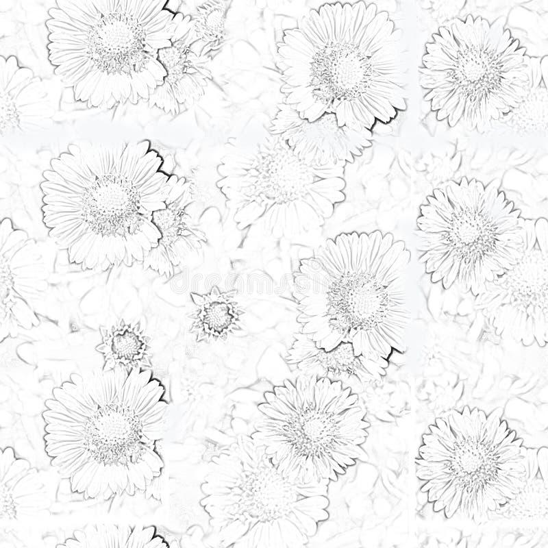 Contornos de florescência do close up das margaridas do preto em um fundo branco ilustração do vetor