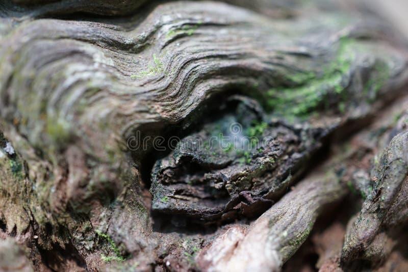 Contornos de madera imágenes de archivo libres de regalías