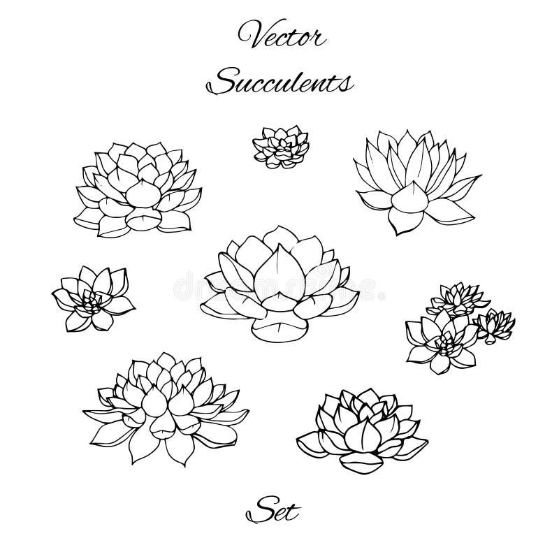 Contornos tirados mão das plantas carnudas do vetor ajustados isolados ilustração do vetor