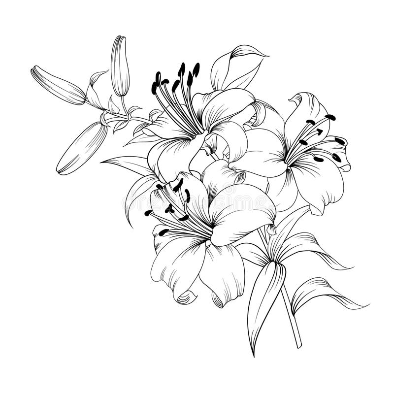White lily flower. Contour of blooming lily isolated over white background. White lily flower. Wedding romantic bouquet stock illustration