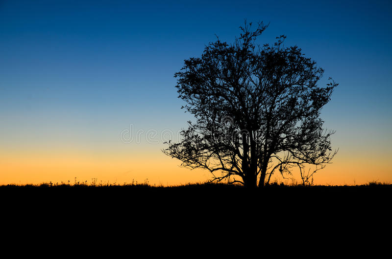 Bush in the morning. Contour of bush in the morning light royalty free stock photo