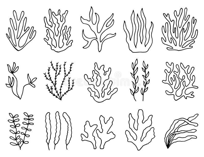 Contour d'algue en isolation ensemble linéaire de dessin d'objets illustration de vecteur