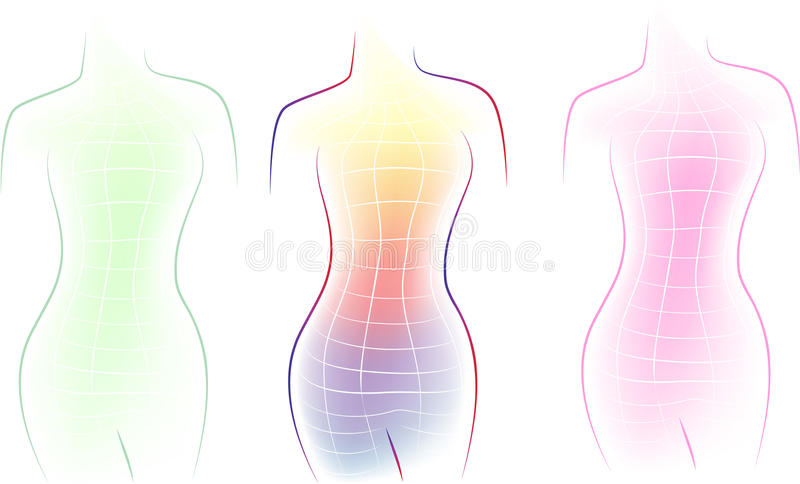 Contour Line Drawing Body : Contour of a female body stock vector illustration