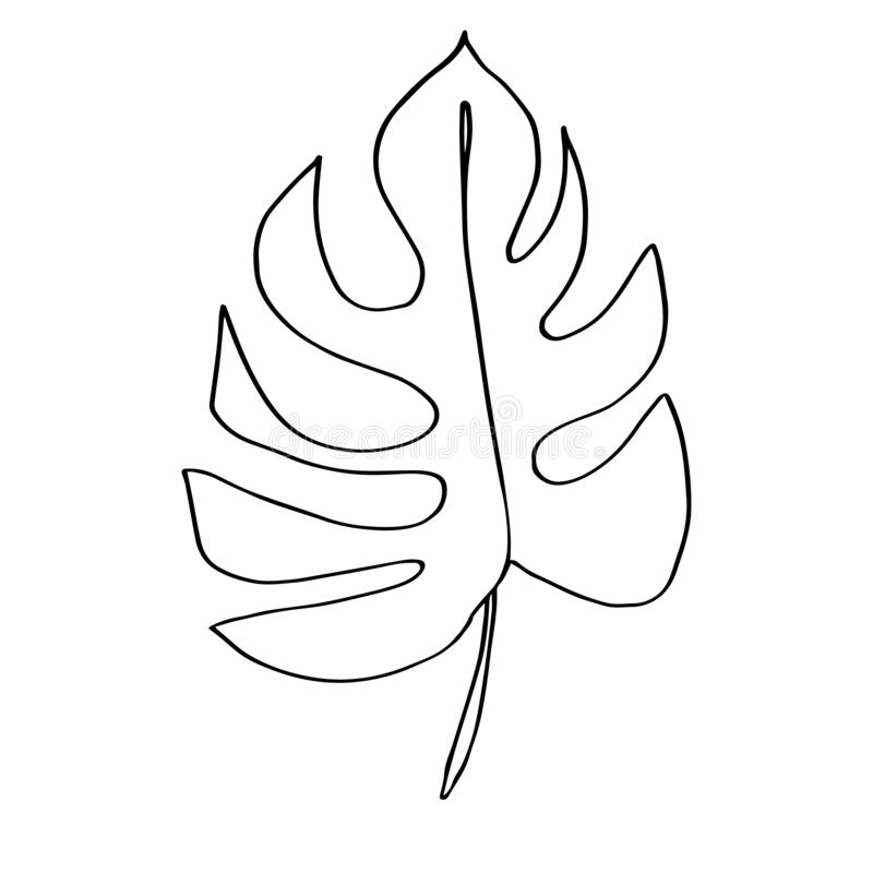 Contour Line Drawing Leaf Of Monstera Modern Minimalism Art Aesthetic Cont Stock Illustration Illustration Of Aesthetic Branch 152234554