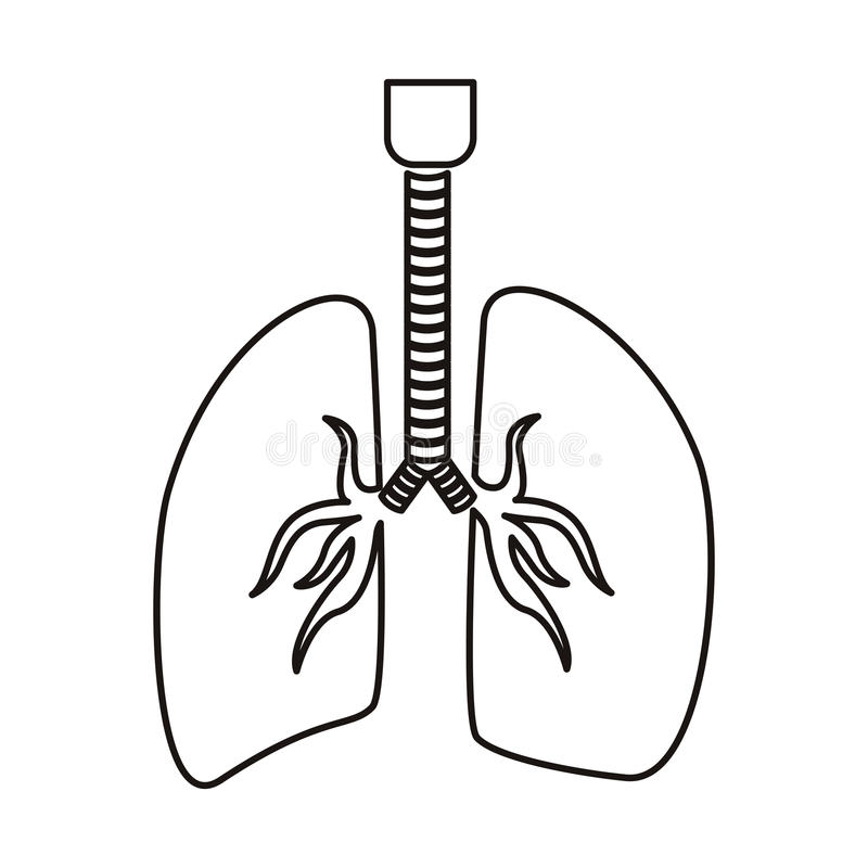 contour respiratory system with lungs stock vector