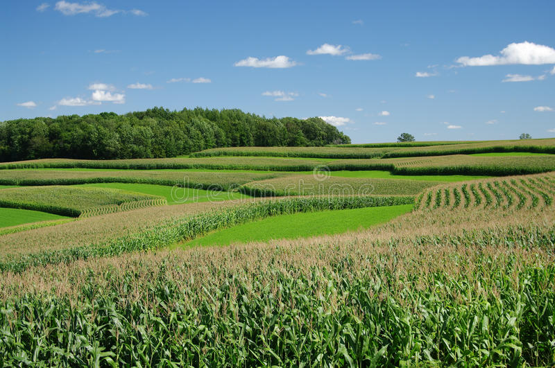Contour Strip Farming stock image