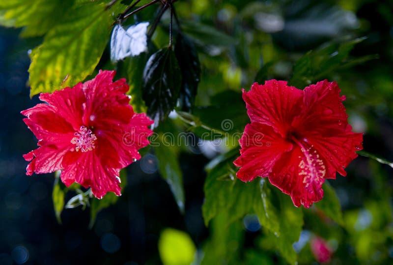 contouren van bloemen op een witte achtergrond royalty-vrije stock afbeeldingen
