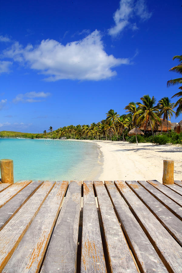 Download Contoy Island Palm Treesl Caribbean Beach Mexico Stock Image - Image: 20777613