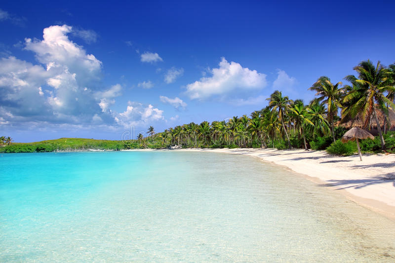 Download Contoy Island Palm Treesl Caribbean Beach Mexico Stock Photo - Image: 20986920