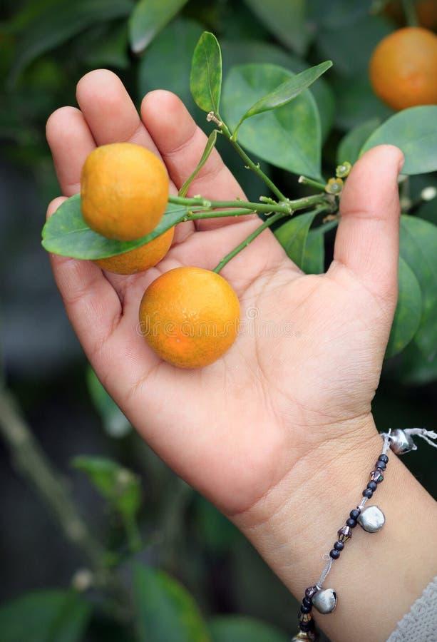 Contrôle orange de qualité photos stock