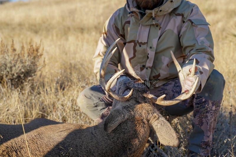 Contrôles de chasseur de grand jeu les cerfs communs qu'il a tirés, regardant l'antl images stock