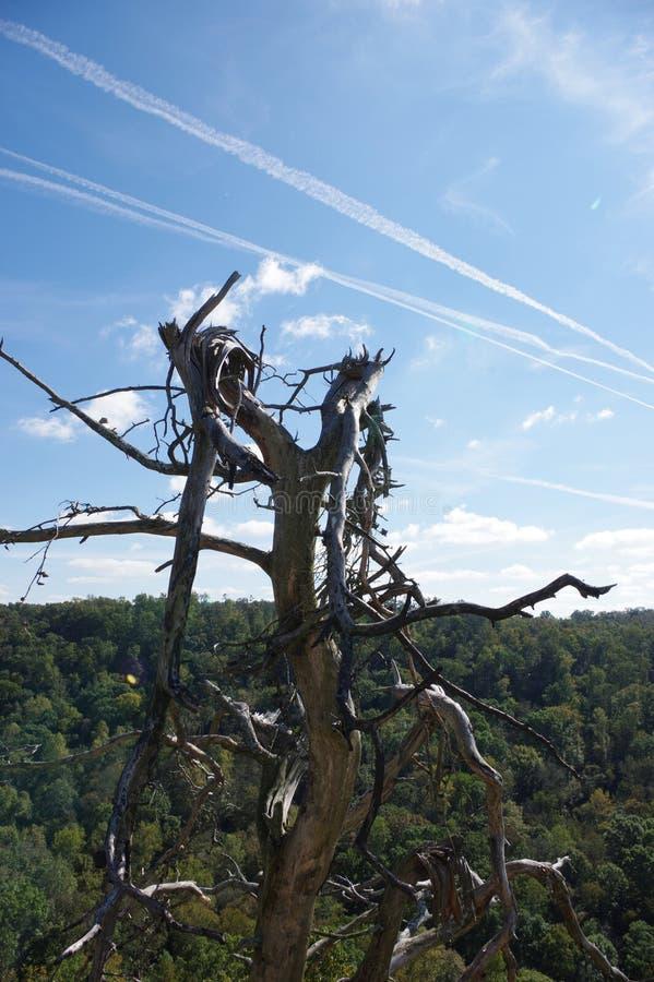 Contrails utöver ett brutet träd arkivbild