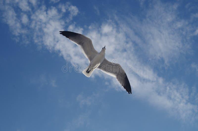 Contrapicado: en seagull arkivfoton