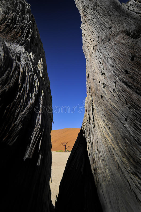 Contrast in the desert. A picture taken at Deadvlei in Namibia stock photography
