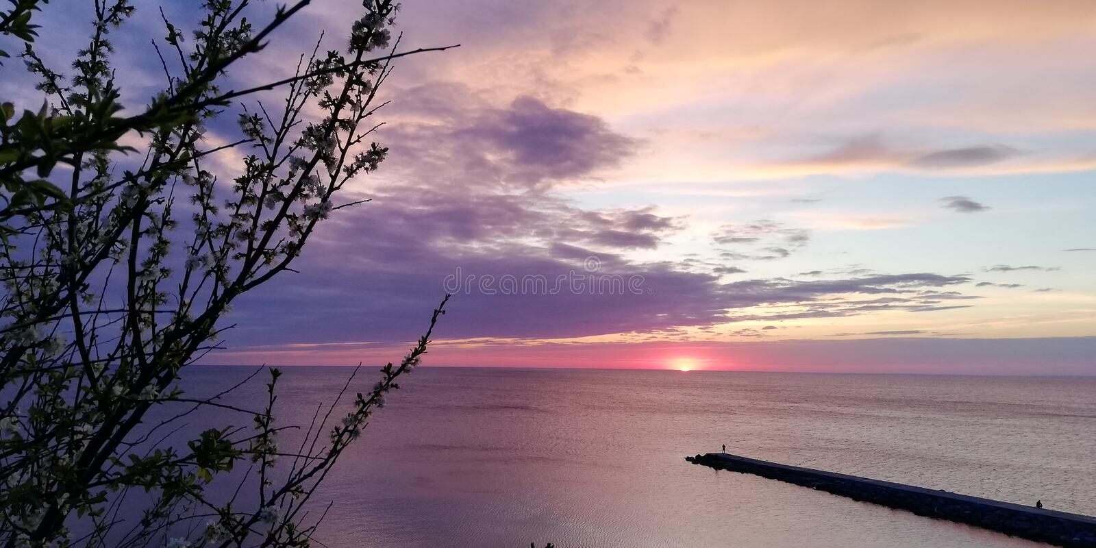 Contrast exciting background. Sea evening sunset landscape in pink, blue and purple tones through the branches of a bush royalty free stock photography