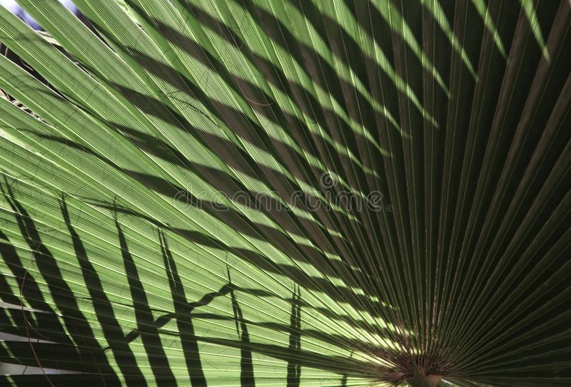 Natural background texture. Light and shadow. The palm leaf. Contrast lighting, bright light and dark background stock image