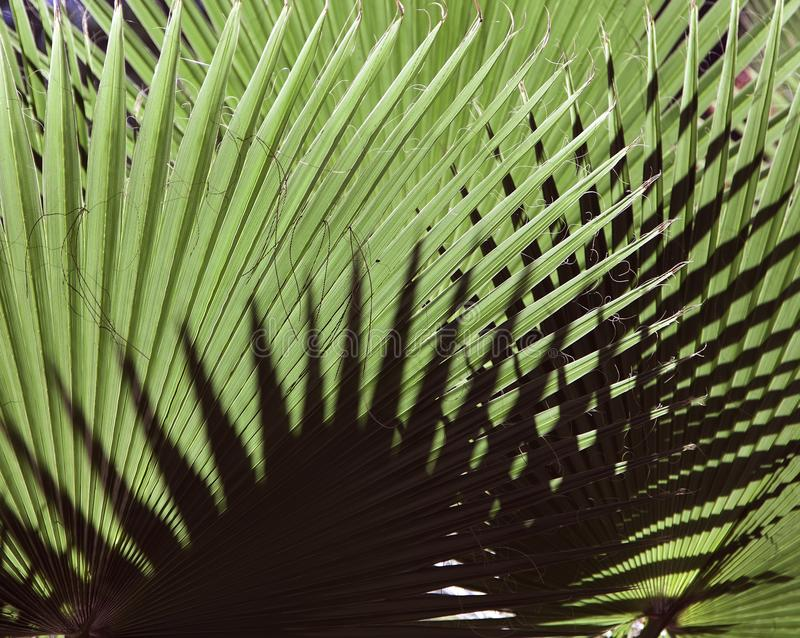 Natural background texture. Light and shadow. The palm leaf. Contrast lighting, bright light and dark background stock photo