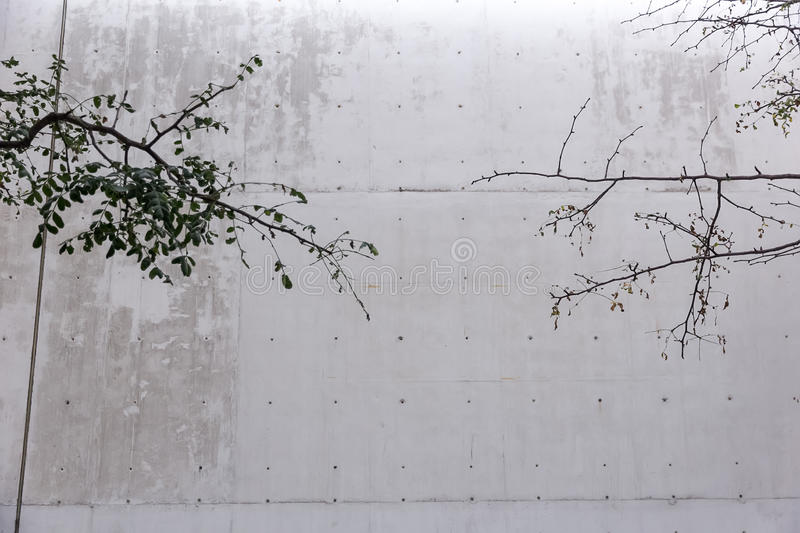 Contrast nature and architecture. Branches of threes and a concrete wall in a minimal space stock photography