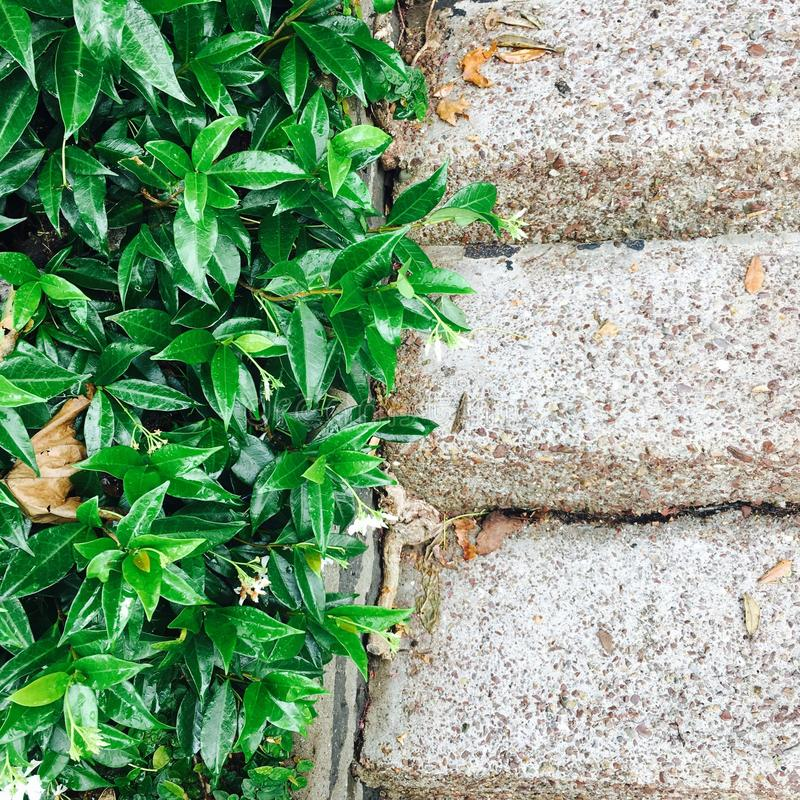 Contrast stone and greenery stock photography