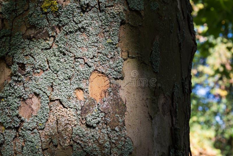 Contraste claro Texutre de Moss Bark Tree Trunk Dramatic imagens de stock royalty free