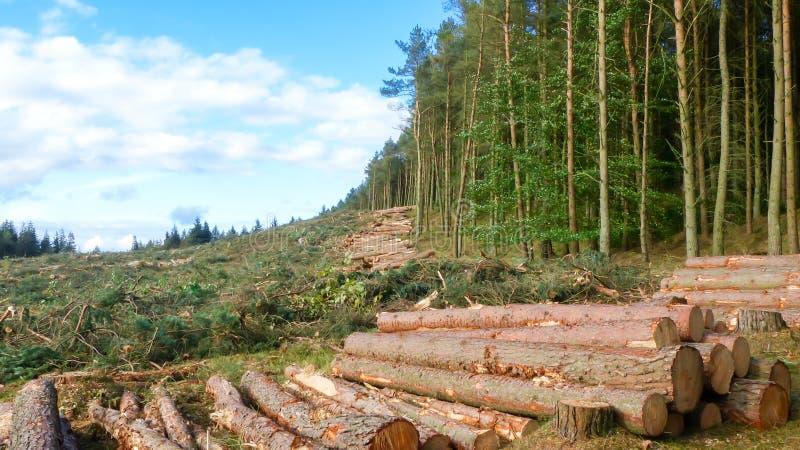 Contraste da vida e da morte - árvores reduzidas ao lado de floresta viva fotos de stock