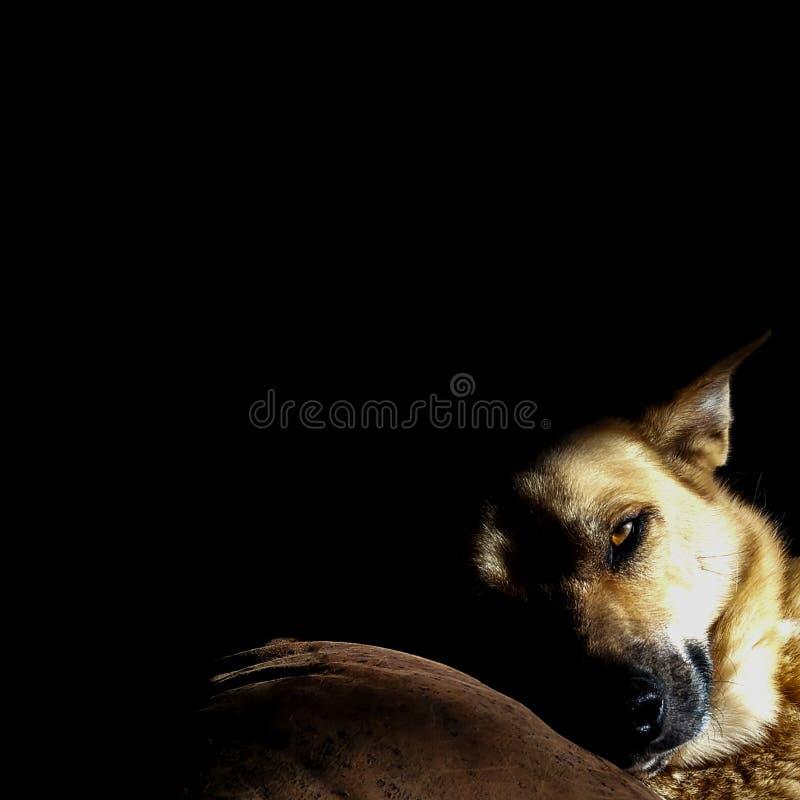 Contraste de chien de sommeil au soleil photographie stock libre de droits